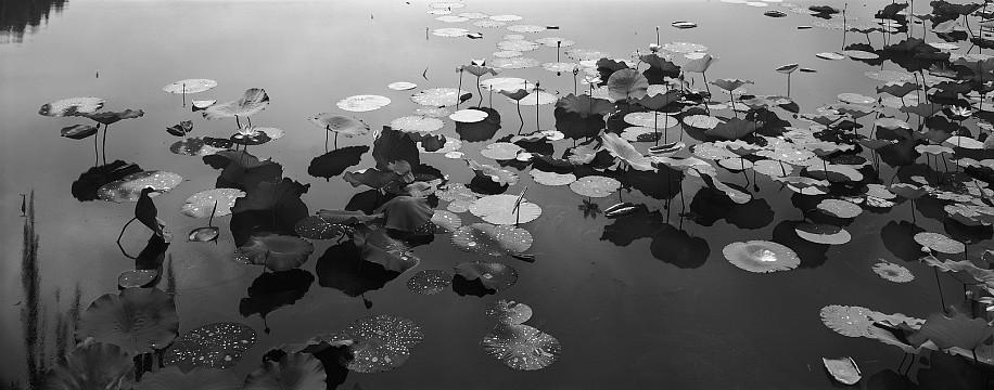 Lois Conner, Yuanming Yuan, Beijing, China 2009, Pigment print