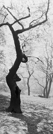 Lois Conner, Bronx Botanical Garden, New York 1990, Platinum print
