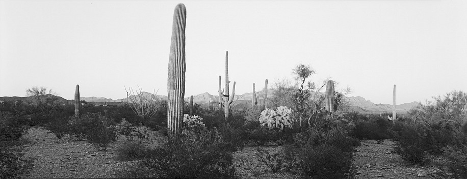 Lois Conner, Organ Pipe Cactus National Monument, Arizona 1988, Platinum print