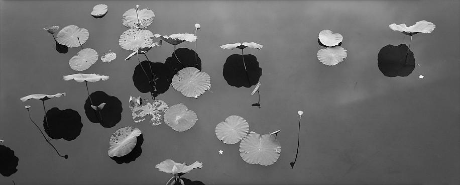 Lois Conner, The Citadel, Hue, Vietnam 1995, Platinum print
