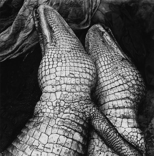 Debbie Fleming Caffery, Gator Love 1995, Gelatin silver print