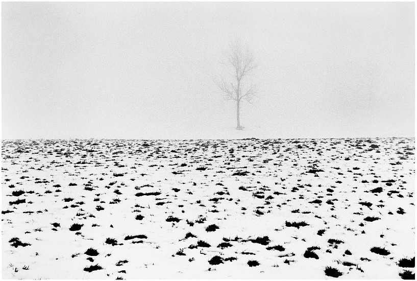 Machiel Botman, Tree Snow 2008, Gelatin silver print