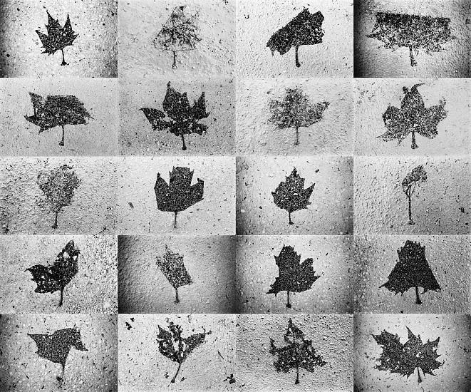 Machiel Botman, Leaves 2008, Gelatin silver print collage