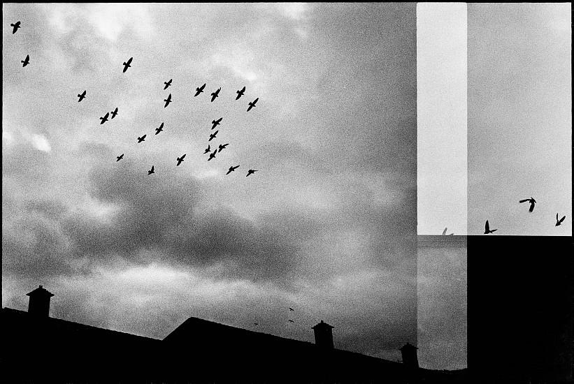 Machiel Botman, Birds, Novare 2009, Gelatin silver print