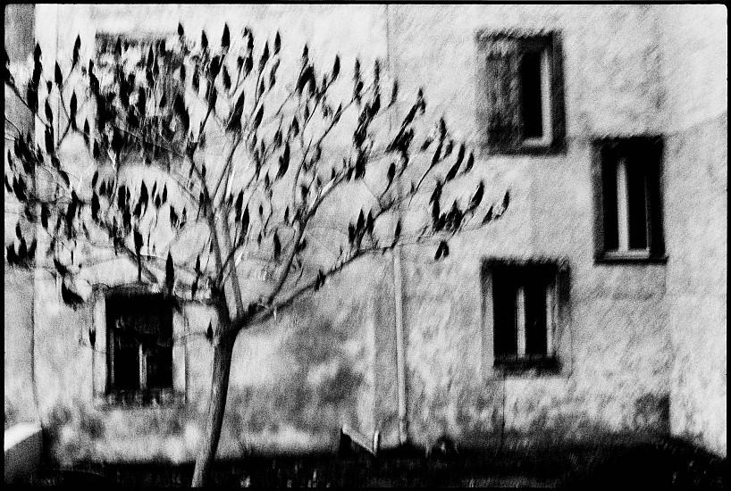 Machiel Botman, Tree House 2008, Gelatin silver print