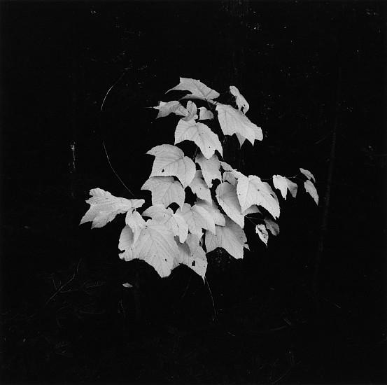 Kenneth Josephson, New York State 1970, Vintage gelatin silver print
