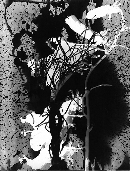 Roger Catherineau, Photogramme 1957, Vintage gelatin silver print